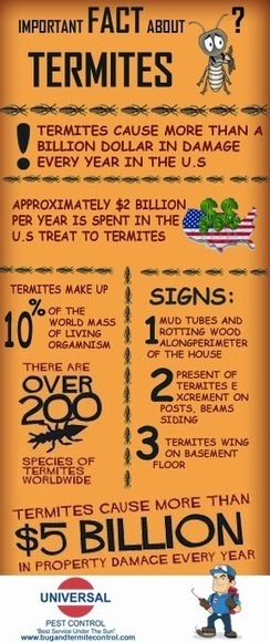 Wondering how most commercial establishment remains protected on termites! It… | Healthcare Marketing | Scoop.it