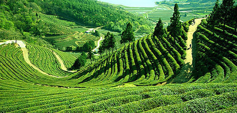 Gangtok Travel Packages from delh | Agra Holiday packages | Scoop.it