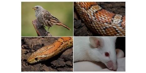 On sait désormais que poils, plumes et écailles ont tous la même origine | Aux origines | Scoop.it