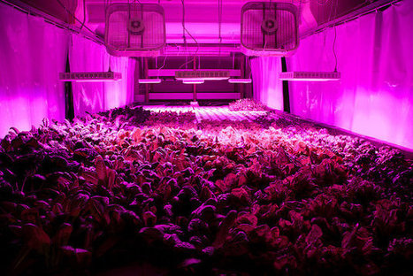 A Former Chicago Meatpacking Plant Becomes a Self-Sustaining Vertical Farm - Design - GOOD | Sustainable Futures | Scoop.it