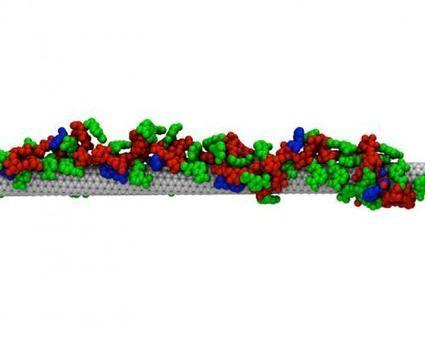 MIT engineers synthesize affibodies (antibody functionals) with carbon nanotubes | Amazing Science | Scoop.it
