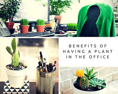 Benefits of having a plant in the office | Lifestyle | Scoop.it