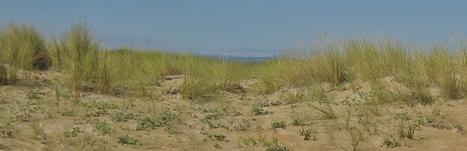Ecosistemas litorales | Biología II | Scoop.it