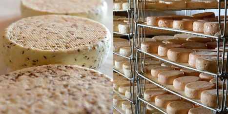 Munster, on aime ton nouveau style | The Voice of Cheese | Scoop.it