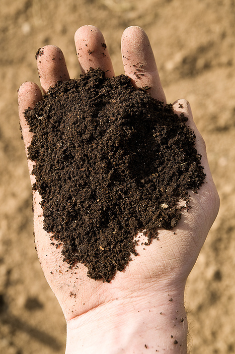 Promoting Good Soil | Vegetable Gardening Resources | Scoop.it