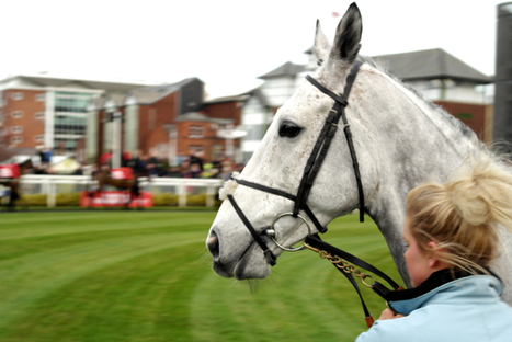 2014 Grand National Grey Runners | Grand National | Scoop.it