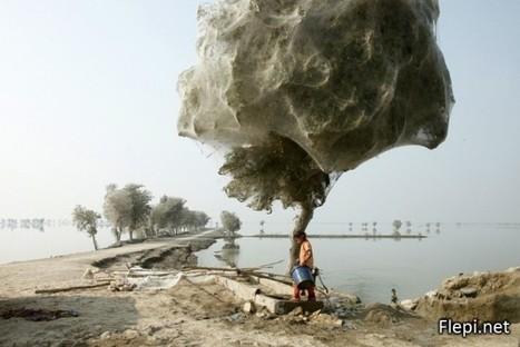 Toiles d'araignées géantes au Pakistan   Epic pics   Scoop.it