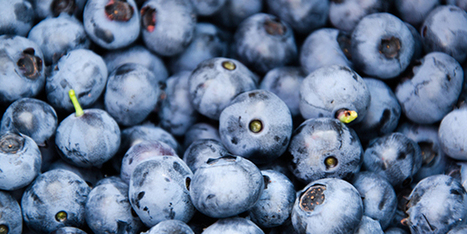 Native Bees Increase Blueberry Crop Yields | Science Blogs | WIRED | Erba Volant - Applied Plant Science | Scoop.it