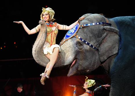 Ringling Bros. and Barnum & Bailey Circus Phasing Out Elephant Acts | Kickin' Kickers | Scoop.it