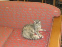 Trixie the Library Cat   Library Cats   Scoop.it