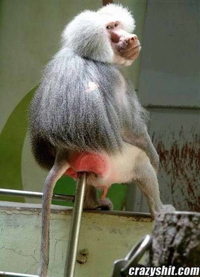 A Homosexual Monkey | MOVIES VIDEOS & PICS | Scoop.it