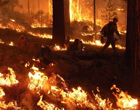 Rim Fire at 225,000 acres as Calif. officials search for cause of massive blaze   What is happening around me?   Scoop.it