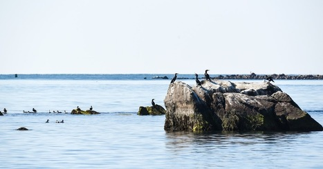 Not As The Crow Flies: Seals, Shipwrecks, & Cuttyhunk Island | Abandoned Houses, Cemeteries, Wrecks and Ghost Towns | Scoop.it