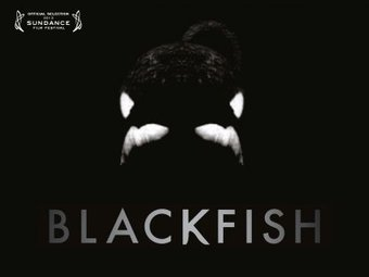 Blackfish Official Film Site | Honor the Orcas, Dive in! | Scoop.it