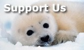 Donate - #DamGuardian - #SeaShepherd Conservation Society ~ only if you can, thxu | Rescue our Ocean's & it's species from Man's Pollution! | Scoop.it