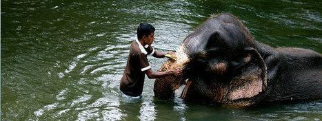 Sri Lanka Beach Holidays | James Anderson | Scoop.it