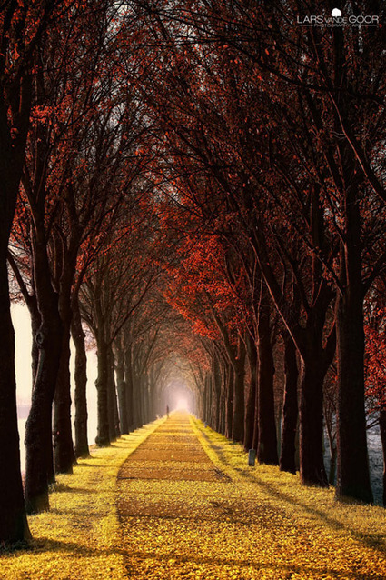 Pictures of Trees - Beautiful and Impressive Tree Photos Inspiration | All about nature | Scoop.it