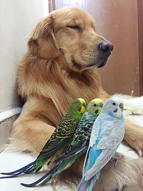 A Dog, 8 Birds And A Hamster Are The Most Unusual Best Friends Ever | News from the MARKET!!!! | Scoop.it