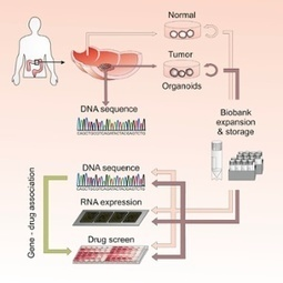 Personalised cancer treatment a step closer with world's first 'living biobank' | Cell Line Contamination | Scoop.it