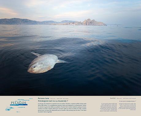 L'EXPOSITION - Pelagos - Regard du Vivant | Blue world news | Scoop.it