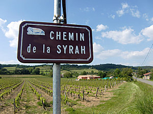 Lettre d'un honnête buveur de vin à l'érudit public des vendredis du Vin : c'est quoi la Syrah ? | Vendredis du Vin | Scoop.it