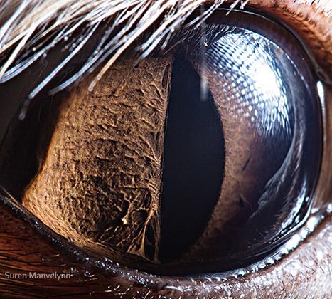 Suren Manvelyan : Les yeux de la nature | Un peu de tout et de rien ... | Scoop.it