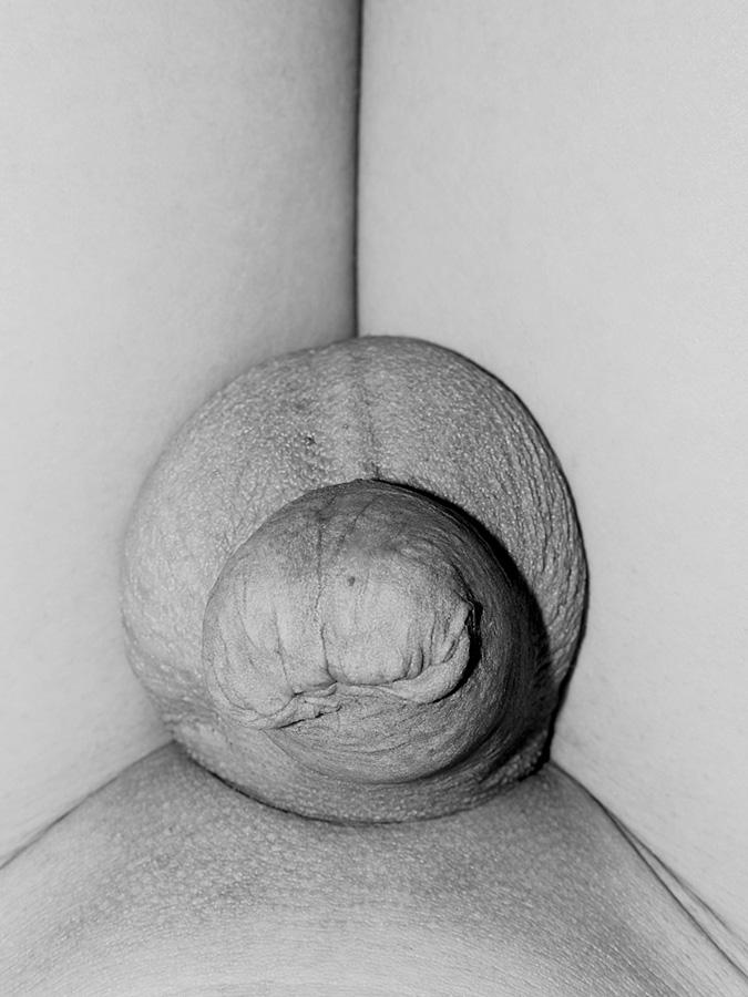 Genitalien-12.jpg