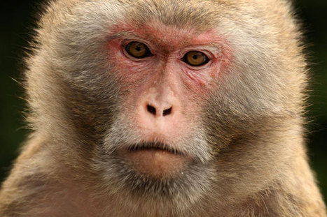 Monkey Mind Control Could Lead to Treatment for Paralyzed Patients | Patient Centered Healthcare | Scoop.it