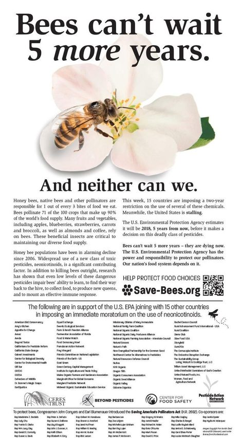 Bees Can't Wait 5 More Years | Bees and Beekeeping | Scoop.it