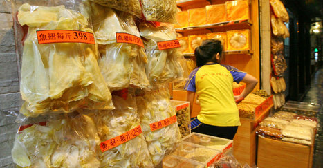 Hong Kong shark fin imports down sharply in five years | All about water, the oceans, environmental issues | Scoop.it