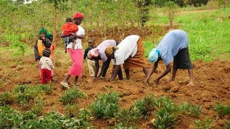 Women contribute 70% of agricultural workforce but get less return – AfDB - TV360 | NGOs in Human Rights, Peace and Development | Scoop.it