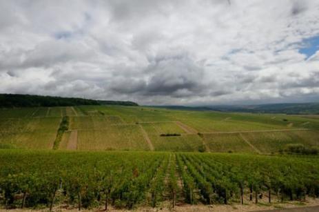 Vin: après le gel, le vignoble de Chablis touché par la grêle   Le vin quotidien   Scoop.it