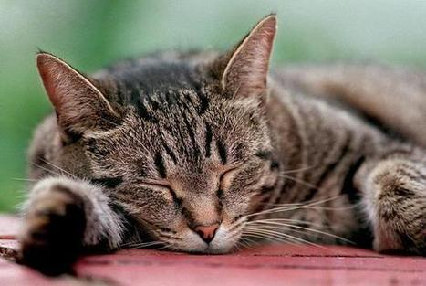 RALEIGH: NC project exposes the secret life of cats | Pet-Related News | Scoop.it