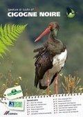 Lancement de la lettre d'information Cigogne noire... | photographie animalière et nature | Scoop.it