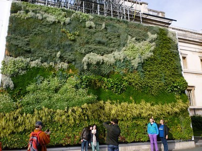 Vertical Green Wall in London is Flourishing After 4 Months ... | Wellington Aquaponics | Scoop.it