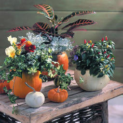 Pumpkin pots | Upcycled Garden Style | Scoop.it