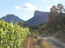 Balade gourmande | Grand Pic Saint Loup Tourism Office | Wine Tourism France | Scoop.it