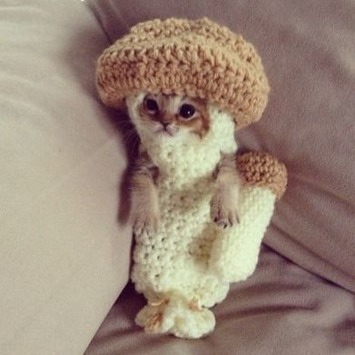 Tiny, Hurt Kitten Wears a Mushroom Costume to Recover | Walking On Sunshine | Scoop.it