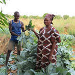 L'expertise du Cirad au service de l'agriculture familiale | International aid trends from a Belgian perspective | Scoop.it