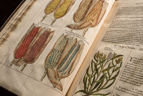 Sam Noble Museum - Preview: Galileo's World and Through the Eyes of...   Global Education   Scoop.it