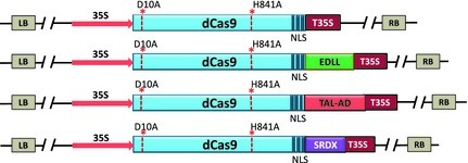 RNA-guided transcriptional regulation in planta via synthetic dCas9-based transcription factors   Awesome Science That  I Like   Scoop.it