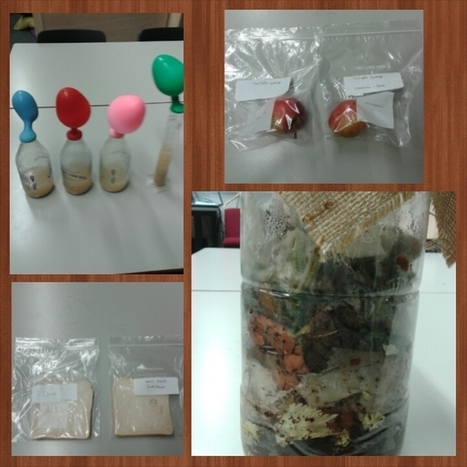 Investigating micro organisms | Miss Barnett's and Mrs Clayton's Class | Marvellous Micro-organisms | Scoop.it