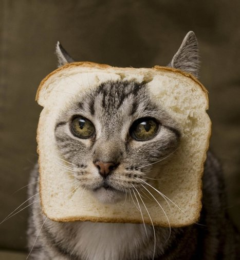 Les amateurs de chats sont plus intelligents que les amateurs de chiens, c'est prouvé scientifiquement! | CaniCatNews-actualité | Scoop.it