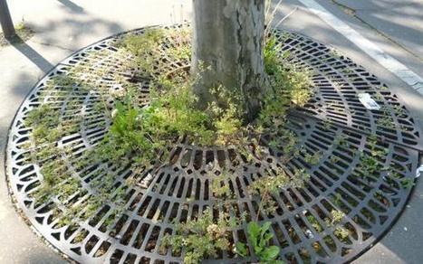 Le secret des plantes super conquérantes de la jungle urbaine | Vigie Nature | Paris durable | Scoop.it