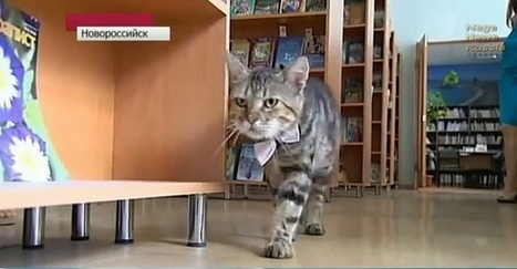 This Russian Library Just Hired a Stray Cat as Its Assistant Librarian | Interesting & Odd Pet Topics | Scoop.it