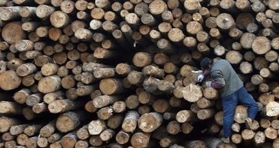 Ghana considers timber imports as industry declines   The Africa Report.com   Forestry   Scoop.it