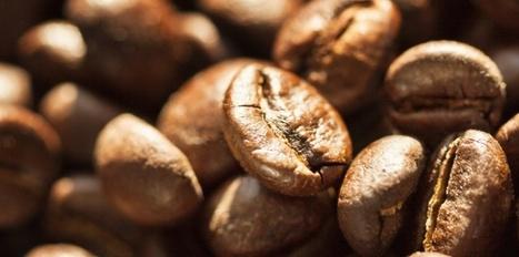 Le café rend-il plus intelligent ? | Belco L'univers Cafés | Scoop.it