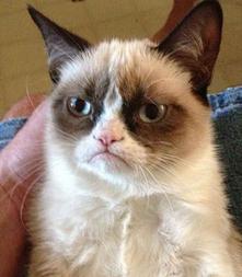 Grumpy Cat Signs Endorsement Deal With Friskies | Animal Science | Scoop.it