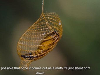 Nature Blows My Mind! 3D printing found in nature with this strange cocoon - Treehugger (blog) | Top CAD Experts updates | Scoop.it
