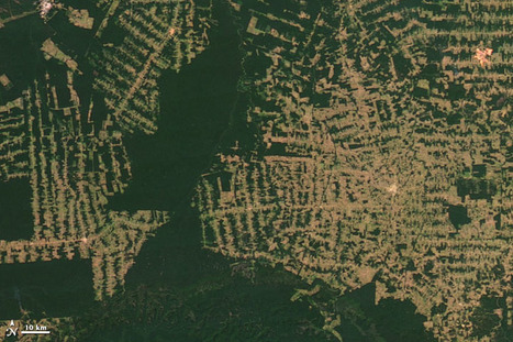 World of Change: Amazon Deforestation : Feature Articles | ECOSALUD | Scoop.it